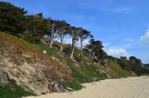 Pinien unter dem Einfluß von Salzwasser und Meereswinden ... Findet den Unterschied