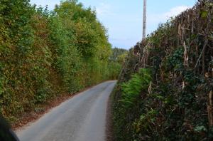 Eine typische Straße in Dartmoor